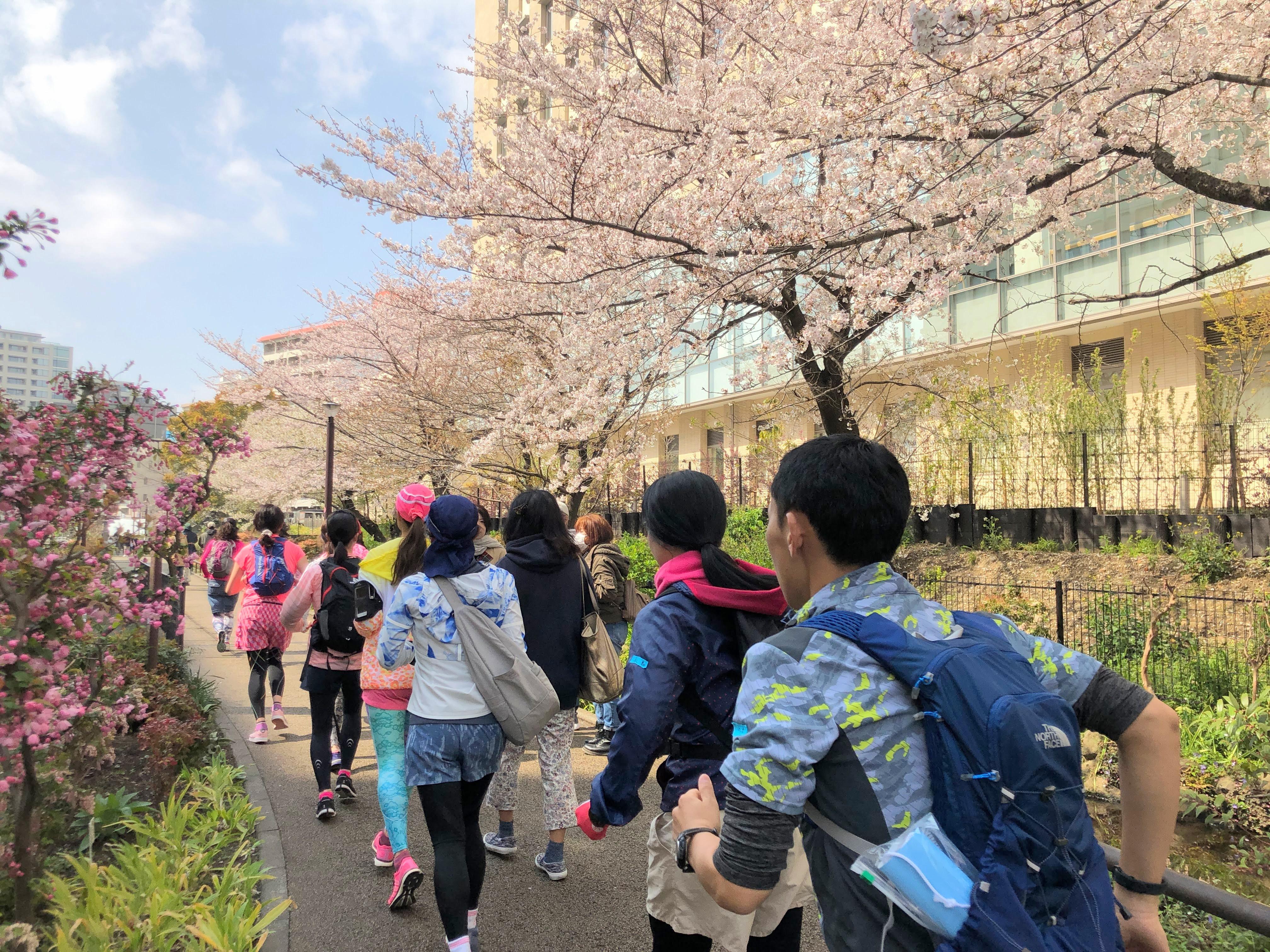 RUN+ 花巡りラン 春 街ラン
