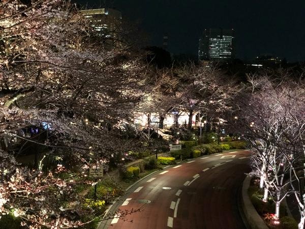 ナイトラン 夜桜