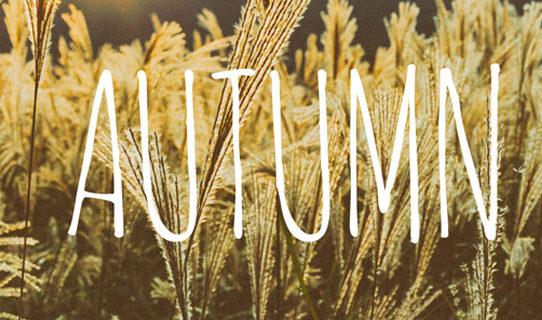 秋 晩夏 ランニング ラン ジョギング すすき お月見 満月 9月 10月 11月