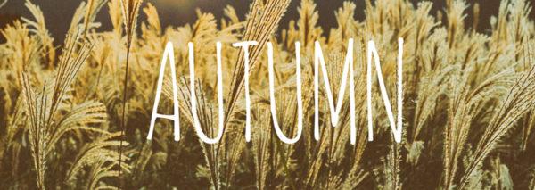 秋 晩夏 残暑 ランニング ラン ジョギング すすき お月見 満月 台風 9月 10月 11月
